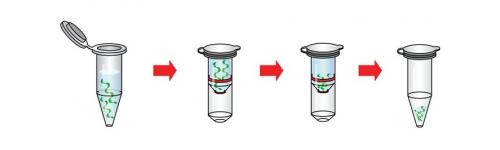 Izolace nukleových kyselin